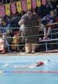 Festejo de 10 para El Delfín en su Torneo de Campeones_28