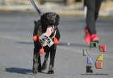 "Participación récord en la 3ª edición ""Corre con tu Mascota""_13"